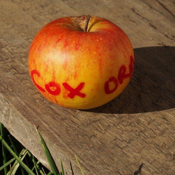"Pommier ""Cox Orange"""