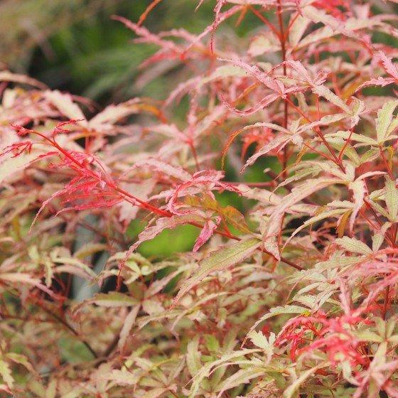 couleur printemps